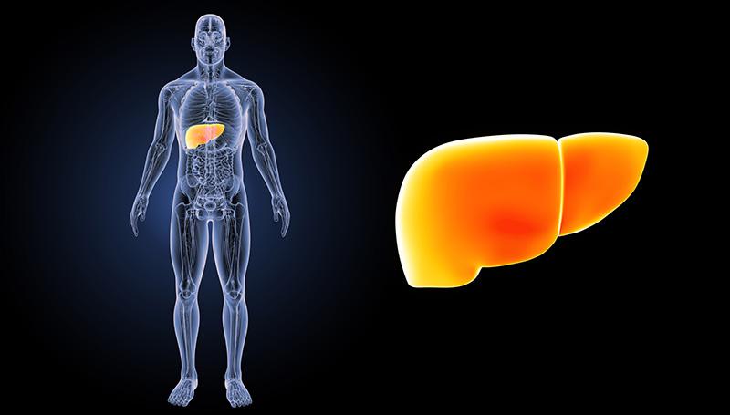 ожирение печени причины и лечение